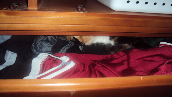 Here's my cat sleeping in the dresser, something I strictly forbade.