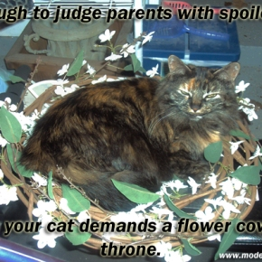 The Hypocrisy of Cat Owners In Regards To HumanChildren
