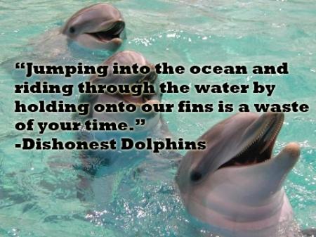 dolphin45
